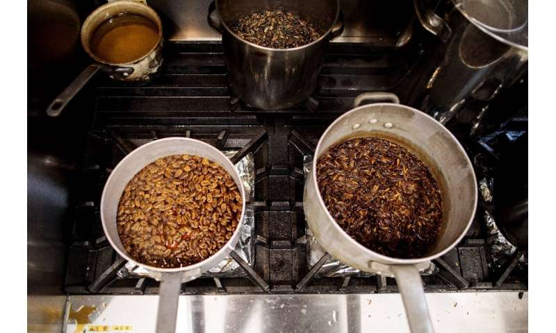 A chef at Tokyo restaurant Antcicada prepares ramen dishes made with dried crickets, cocoons, and grasshoppers