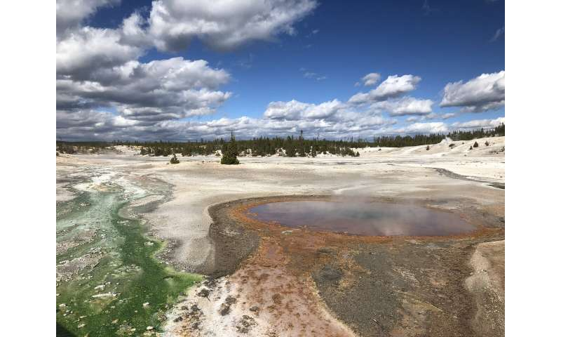 Acid-loving microbe can improve understanding of past climate