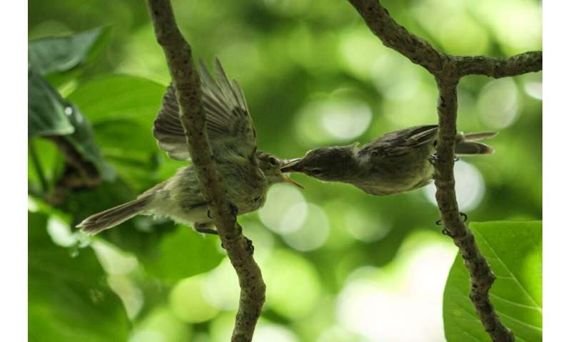 A conservation group bought the tiny Seychelles isle of Cousin Island in 1968 to save a songbird, the Seychelles Warbler, from e