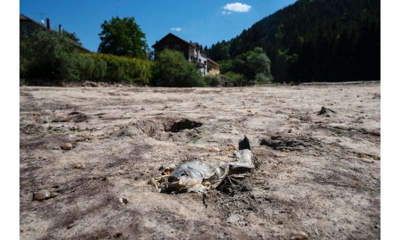 A dead fish in the dry Doubs river in eastern France