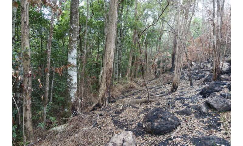 A forest and its history, threatened