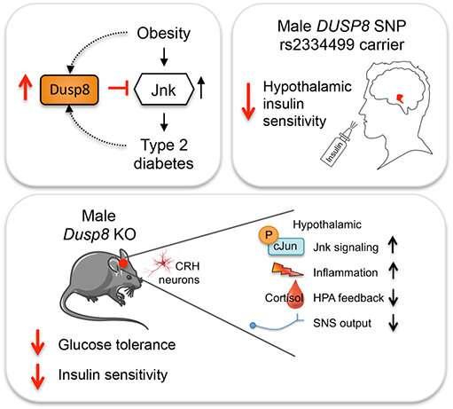 A gatekeeper against insulin resistance in the brain