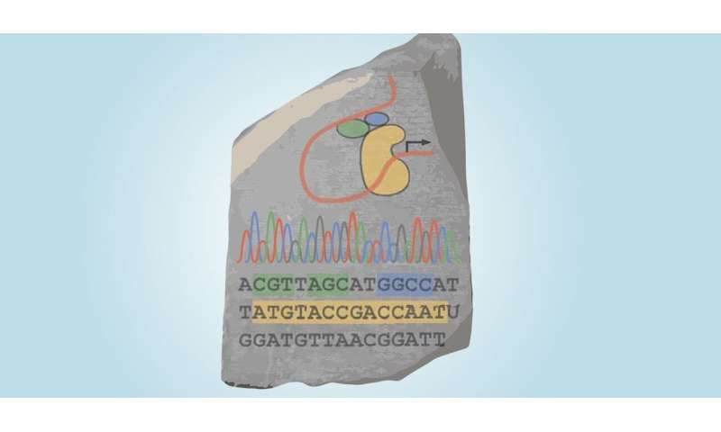 "A ""genomic rosetta stone"" for discovering the rules of gene regulation"