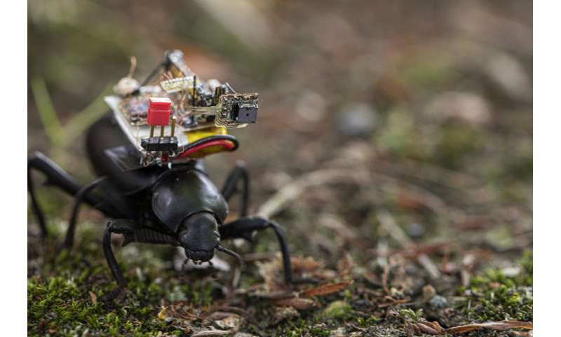 A GoPro for beetles: Researchers create a robotic camera backpack for insects