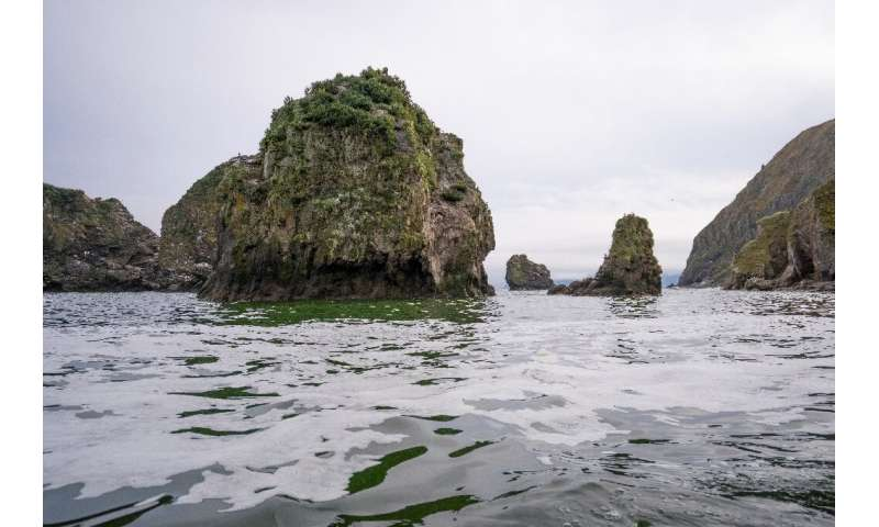 A Greenpeace handout photo showing the area off Khalaktyr beach on the Kamchatka peninsula that may have been contaminated with