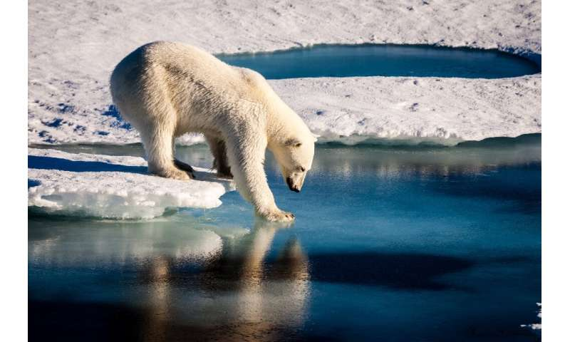 A handout photo provided by the European Geosciences Union in 2016 shows an undated photo of a polar bear testing the strength o
