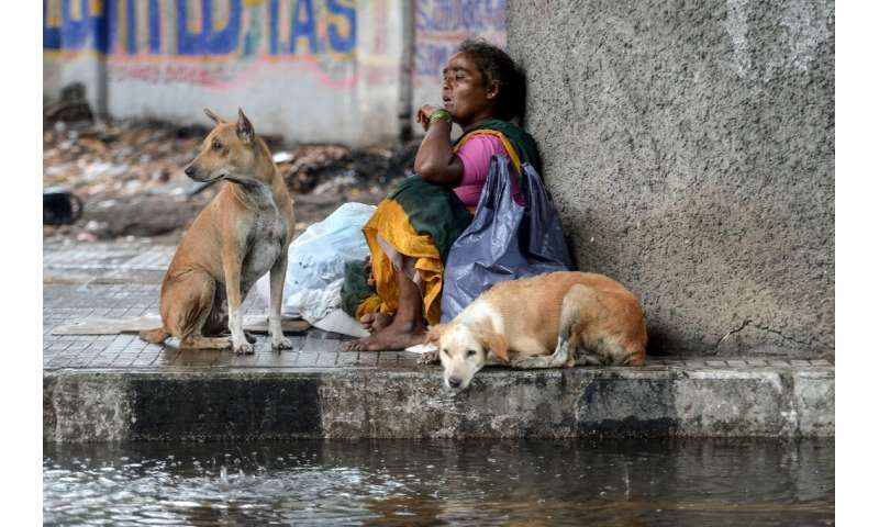 A homeless woman and stray dogs sit beneath a bridge in Chennai as it rains during a government-imposed nationwide lockdown in I