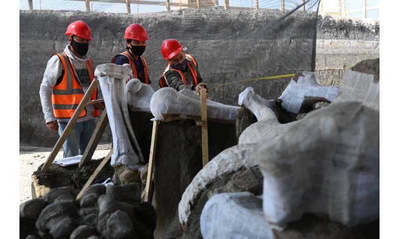 A huge mammoth graveyard has been uncovered at the site of Mexico City's new airport
