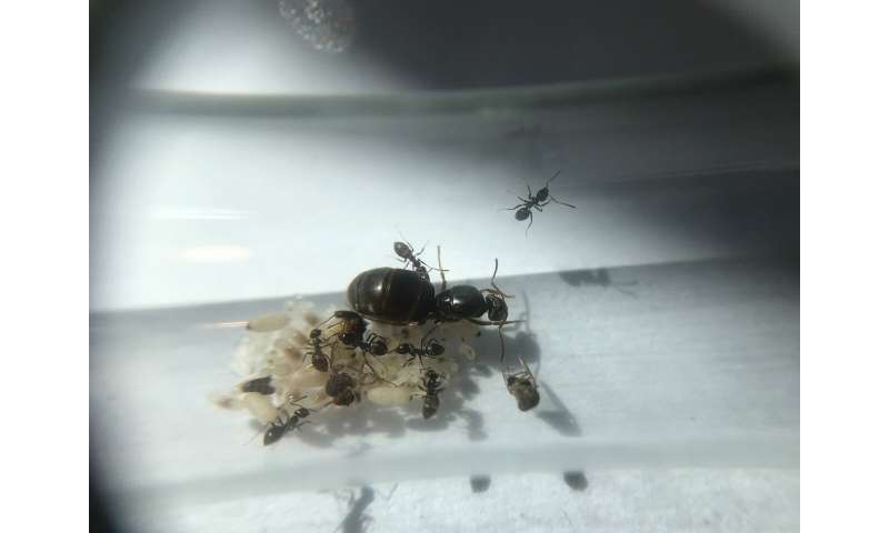 Alarming long-term effects of insecticides weaken ant colonies