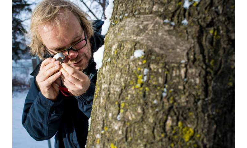 Alaskan rainforests are a global lichen hotspot, new study shows