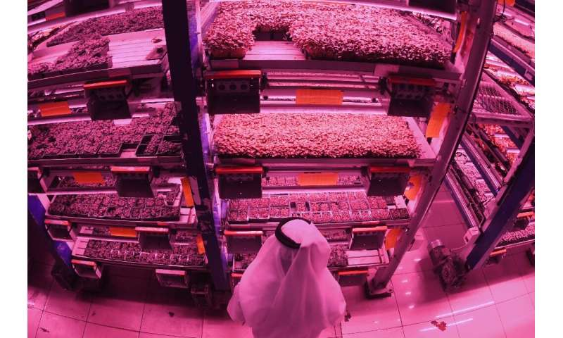 Al-Badia market garden farm produces an array of vegetable crops in multi-storey format, carefully controlling light and irrigat
