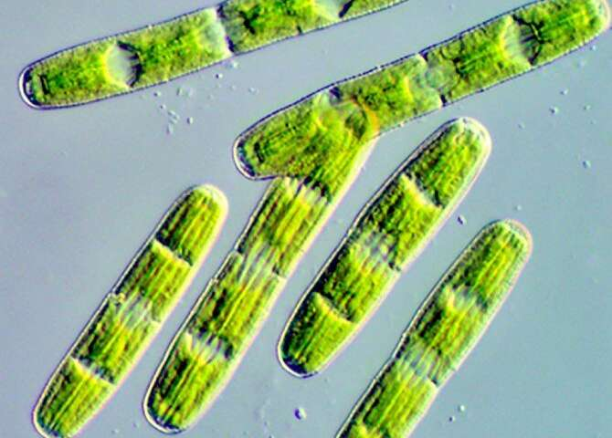 Algal genome provides insights into first land plants