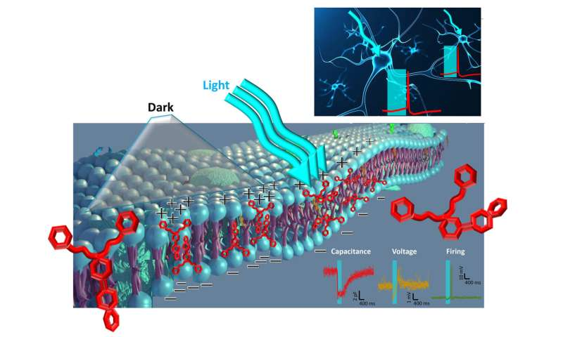 A light-sensitive compound enables heatless membrane modulation in photoswitches