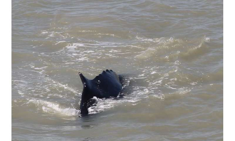 Although whales are sometimes seen off the Northern Territory coast, it is believed to be the first time one has been spotted in