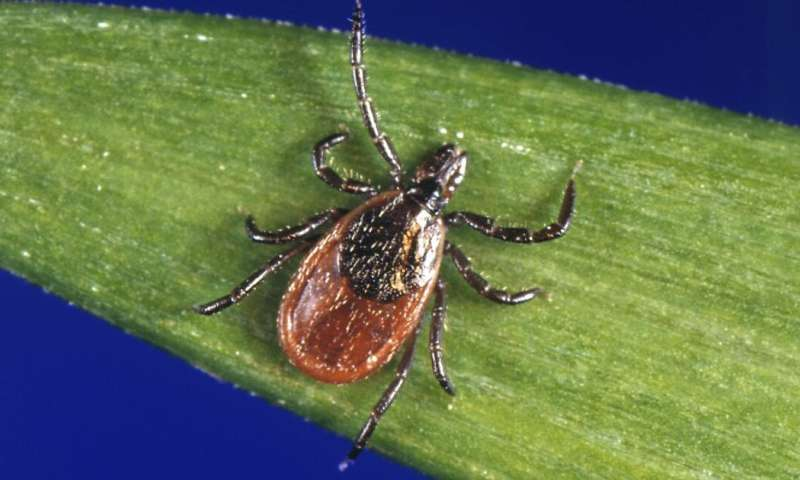 A Lyme disease vaccine doesn't exist, but a yearly antibody shot shows promise at preventing infection