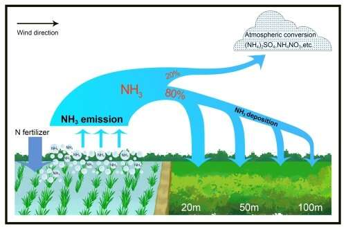 Ammonia emitted from fertilized paddy fields mostly does not end up in air