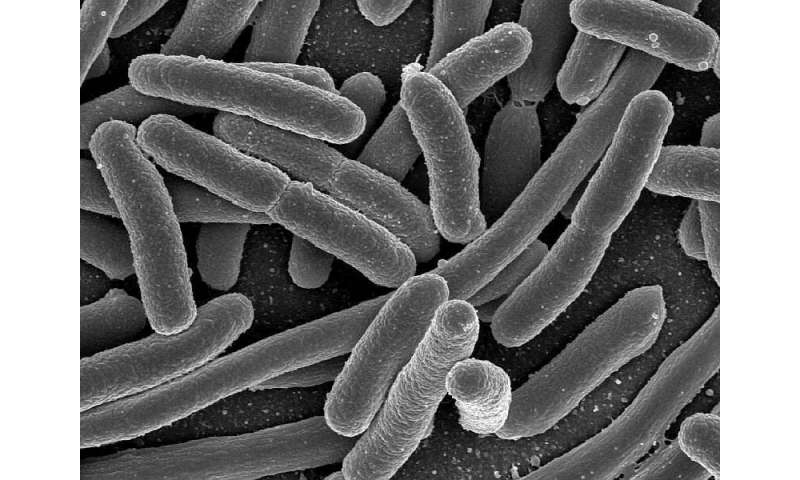 <i>E. coli</i> outbreak tied to clover sprouts rises to 39 cases in six states