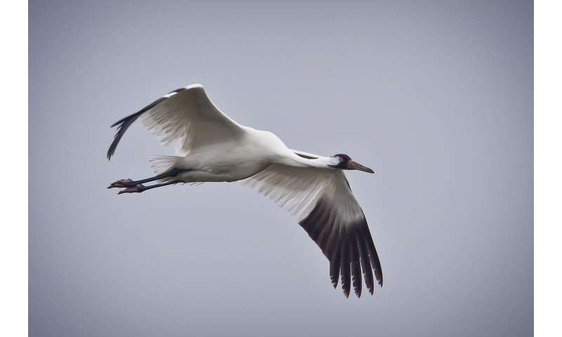 Analysis of bird species reveals how wings adapted to their environment and behavior
