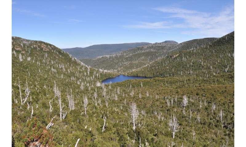 Ancient Australian trees face uncertain future under climate change, study finds