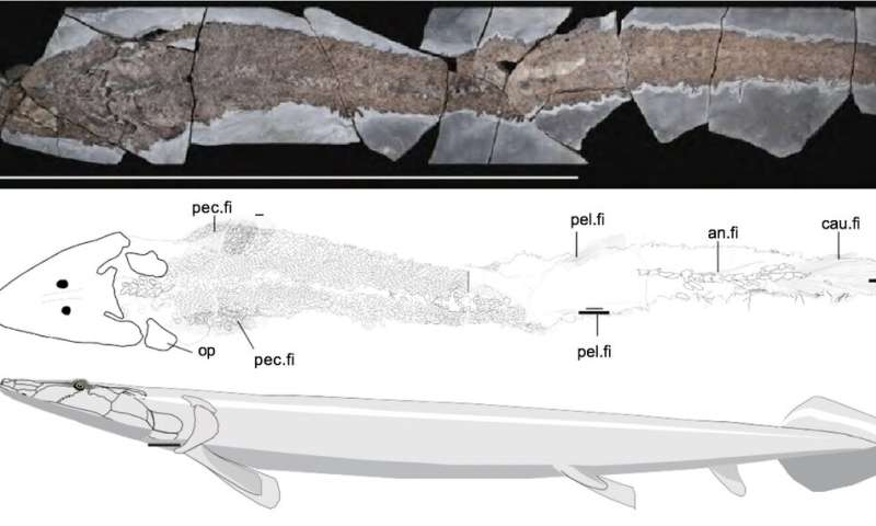 Ancient fish fossil reveals evolutionary origin of the human hand