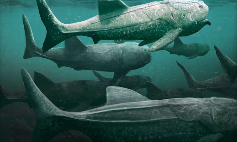Ancient giant armored fish fed in a similar way to basking sharks
