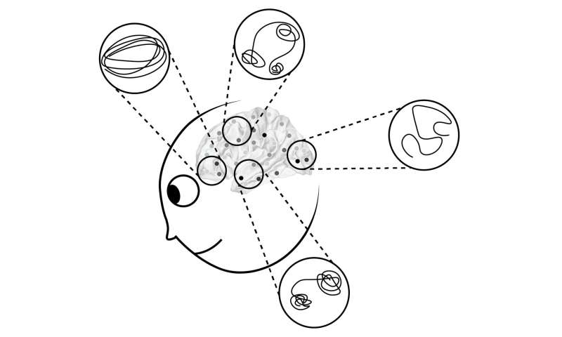 A new framework for understanding dynamic representations in networked neural systems