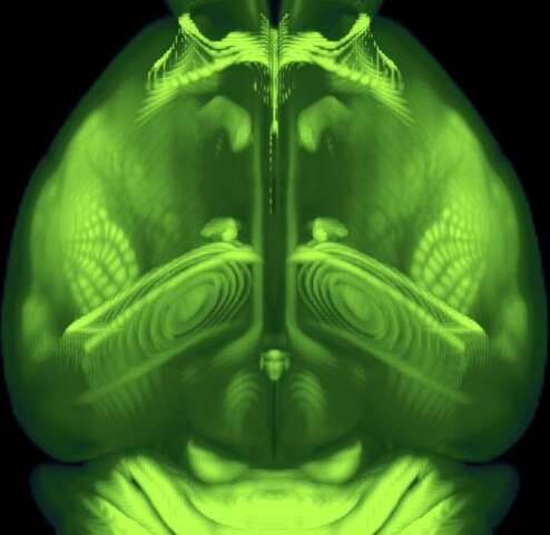 A new high-resolution, 3D map of the whole mouse brain