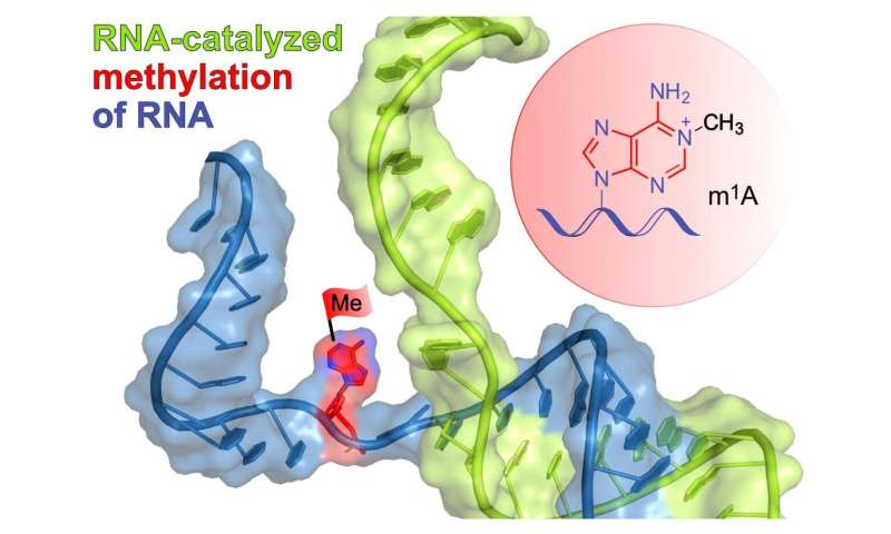 A new RNA catalyst from the lab