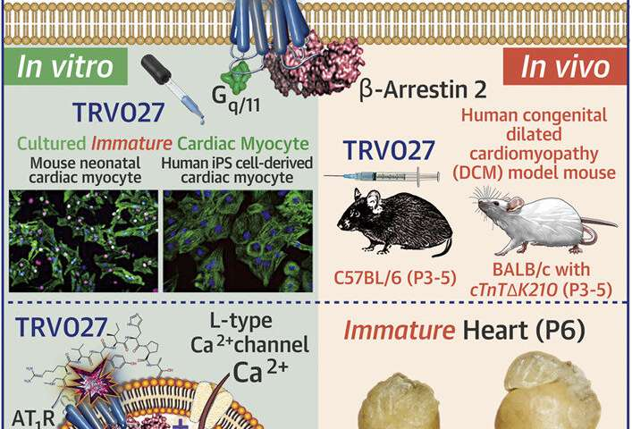 A novel drug target for neonatal and infant heart failure