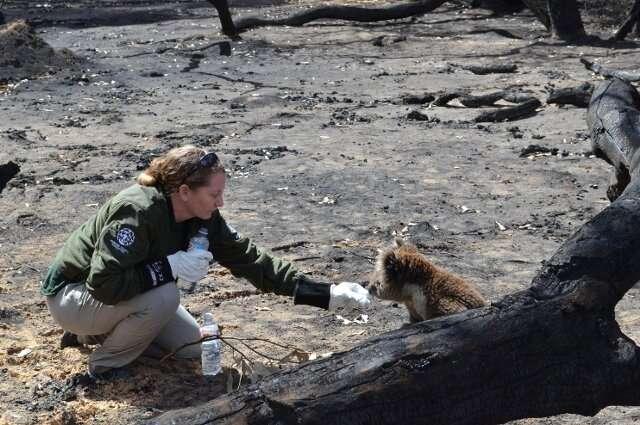 An S.O.S. for Australian Wildlife