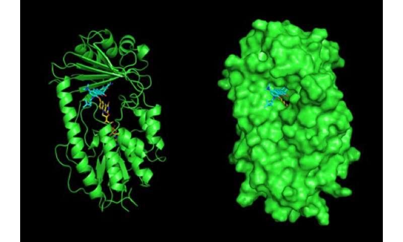 Antibiotic-destroying genes widespread in bacteria in soil and on people