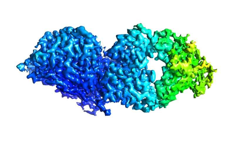 Antibodies protect against wide range of influenza B virus strains