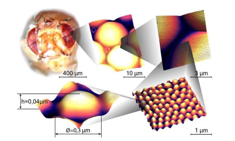 Anti-reflective coating inspired by fly eyes