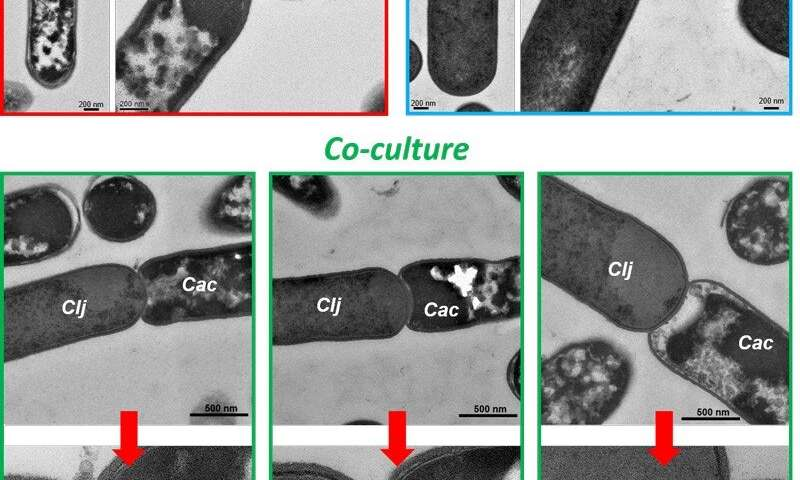 An unprecedented discovery of cell fusion