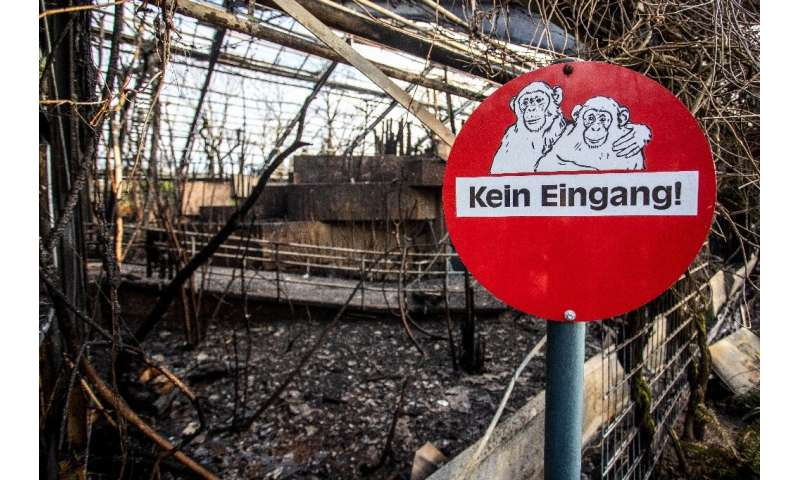 A preliminary investigation suggests that flames from flying lanterns might have sparked a fire at the Krefeld zoo tha killed do