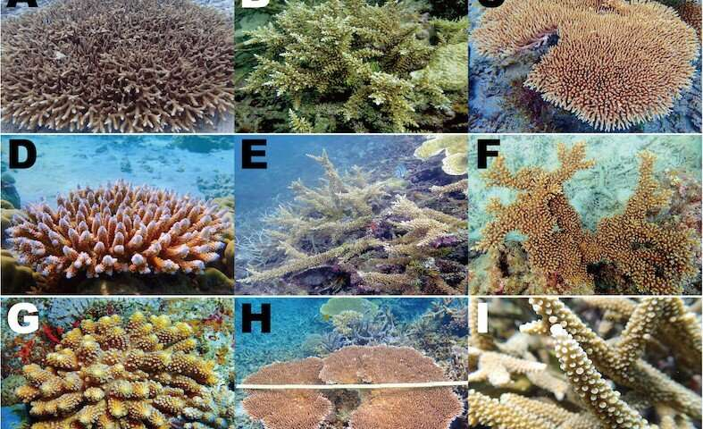 Are corals genetically equipped to survive climate change?