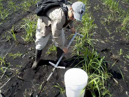 Are sinking soils in the Everglades related to climate change?
