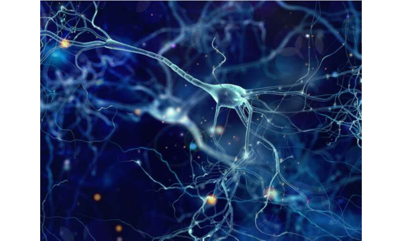 Artificial nerve cells could cure chronic diseases