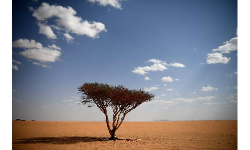 A satellite survey has revealed millions of trees dot desert areas once considered effectively barren