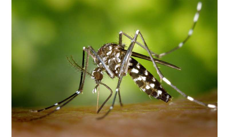 Asian tiger mosquito gains ground in Illinois