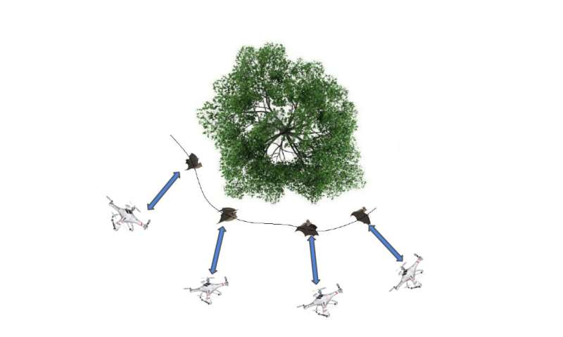 A simulation framework for recreating bat behavior in Quad-rotor UAVs