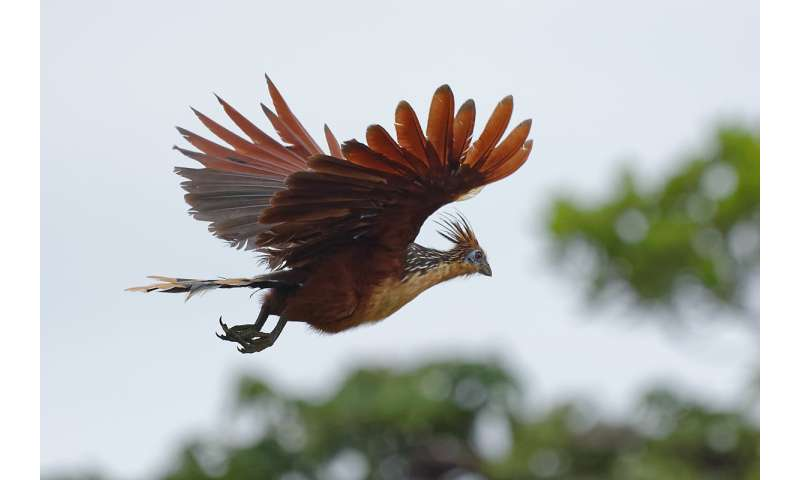 Avian tree of life better resolved