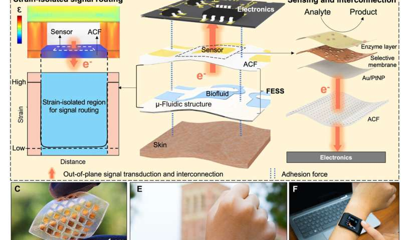 A wearable freestanding electrochemical sensing system