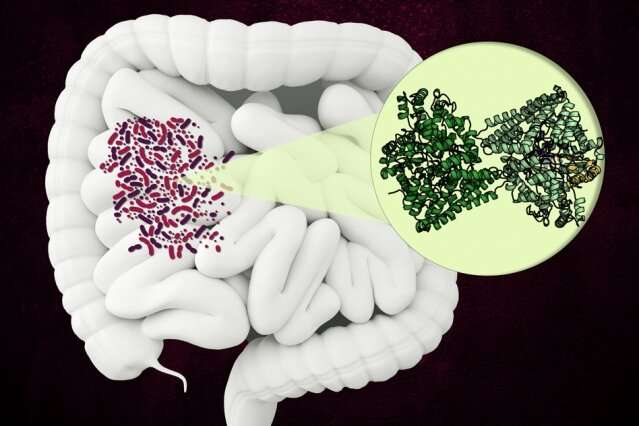 Bacterial enzyme could become a new target for antibiotics