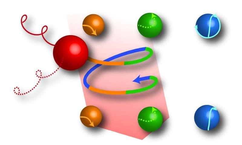 Bacterium makes complex loops
