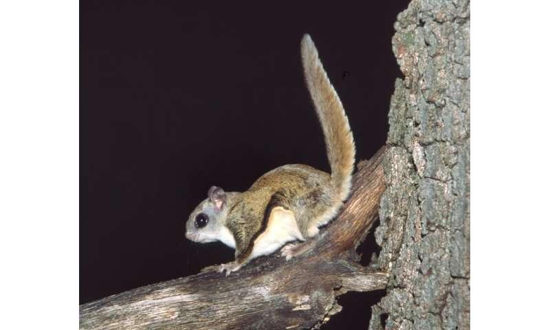 Balancing impacts of range-shifting species: Invasives vs biodiversity