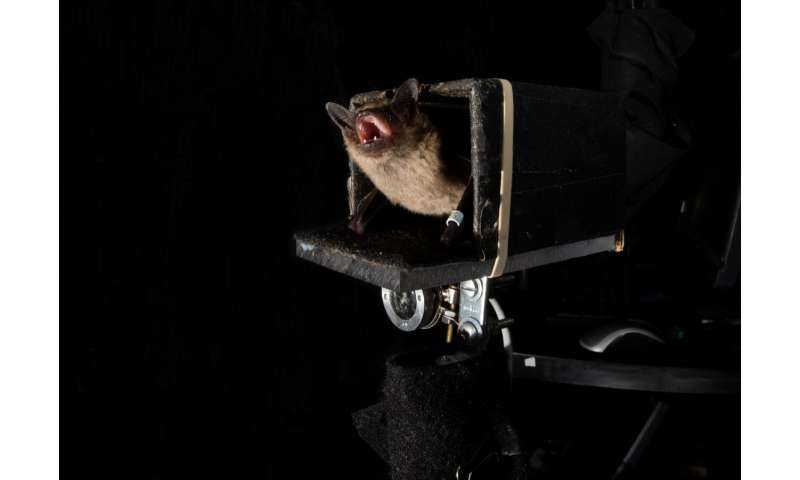 Bats can predict the future, JHU researchers discover