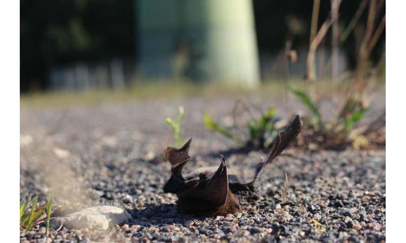Bats save energy by reducing energetically costly immune functions during annual migration
