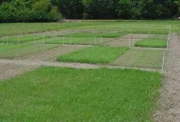 Bermudagrass harvest management options with poultry litter fertilization