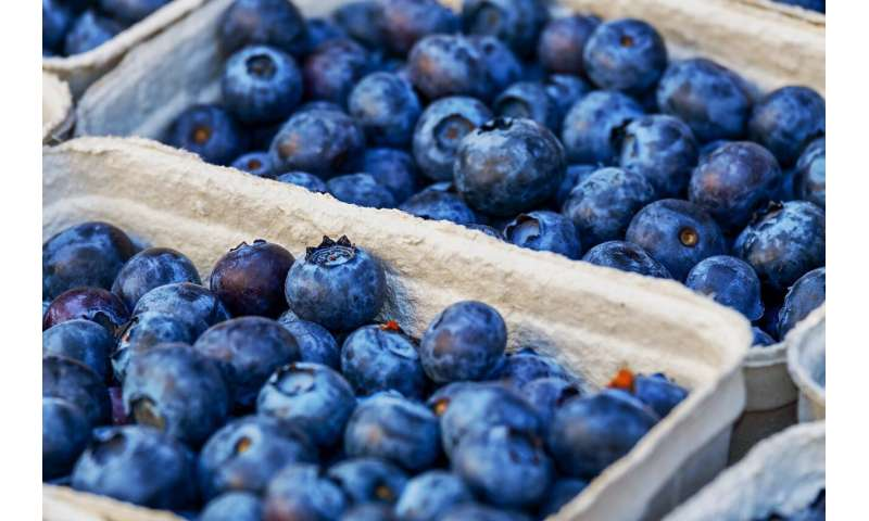 Berry good news -- new compound from blueberries could treat inflammatory disorders